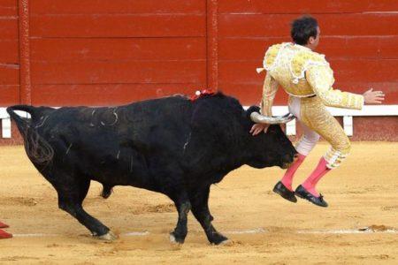 スペインの闘牛士が昨年に続き、再び牛の角でお尻を刺されてしまう