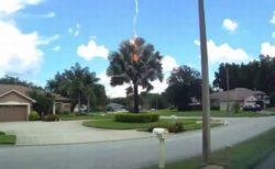 空が晴れ渡っているのに突然落雷、パームツリーに落ちる瞬間の動画