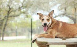 「飼い主は1日に2回犬を散歩せよ!」ドイツで新しい法律を導入予定