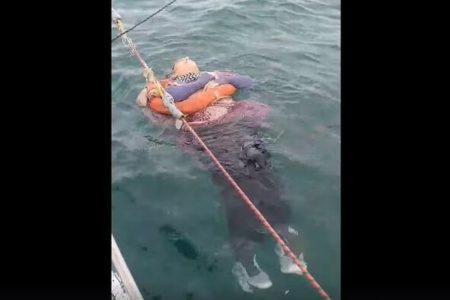 コロンビアの沖合で生きたまま浮かんでいた女性を救助、2年前から行方不明