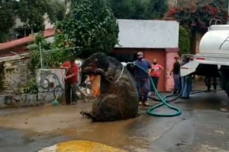 メキシコの下水路で巨大なネズミを発見?清掃していた作業員もびっくり