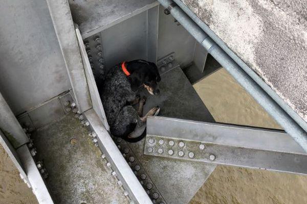 橋の鉄骨部分で犬を発見、点検していた作業員が偶然発見し保護