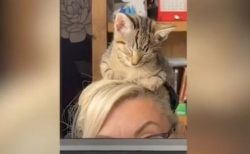 ビデオ会議中の女性の頭で、うたた寝してしまう子猫がかわいい