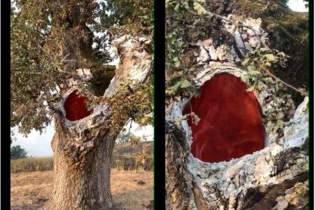 内側だけが燃え盛る1本の木…。消防士が撮影した動画が怖いほど美しい