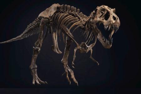 ティラノサウルスの骨格丸ごと、クリスティーズのオークションに