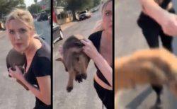 ヘイト女性が投げつけてきたのは子犬!被害者が保護して幸せに