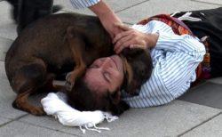 僕がいるから大丈夫!お芝居で倒れる俳優に寄り添った心優しい野良犬