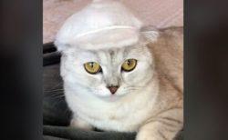 ネコの毛を使って、可愛い帽子をつくるTikTokの動画が話題に