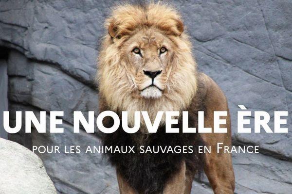 フランス政府がサーカスやマリンパークでの野生動物の利用・飼育を段階的に禁止へ