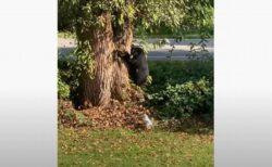 体は大きいけれど怖かった?クマが小型犬に吠えられ、ビビって逃走