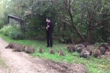 笛でアライグマを呼ぶネイティブ・アメリカンの秘術が効き過ぎて驚き【動画】