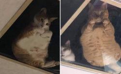猫用にガラスの天井を付けたら、いつも監視されるようになっちゃった
