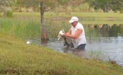 フロリダ州で男性が池でワニと格闘、食べられそうな子犬を救出