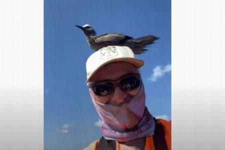 オーストラリアで船にいた男性の頭に突然、鳥がとまる、しかも延々とリラックス
