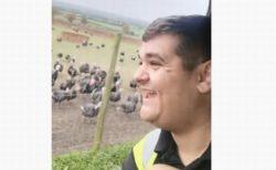 人の声に合わせて、七面鳥の群れが一斉に笑うような動画が面白い