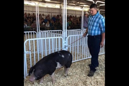 恩師を救うため少年が競り市で売った豚、善意のバイヤーたちが買って返却し続ける