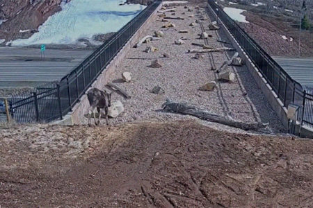野生動物のための歩道橋が大成功、利用者(?)が続々と