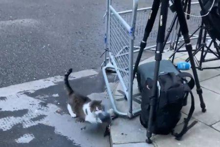 報道陣の前で派手な捕獲劇を行ったネコのラリー、世間の目をそらすのが目的か
