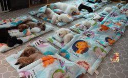 子犬たちがスヤスヤ、お昼寝タイムの様子を捉えた動画が可愛すぎる!