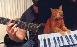 ピアノを弾くニャンコ、飼い主がギターで合わせ一緒に演奏する動画が面白い
