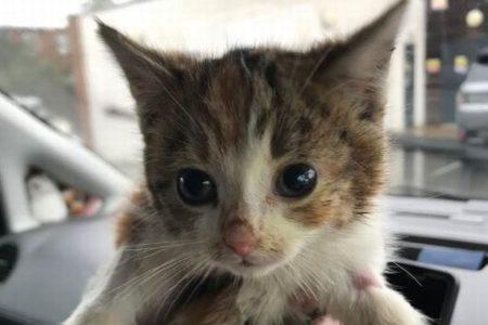 深さ1.8mのパイプに落ちた子猫、死にかけたまま救出され、奇跡的に回復