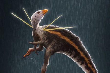 硬いリボンを持ったニワトリ・サイズの恐竜、メスを誘うダンスをしていた可能性