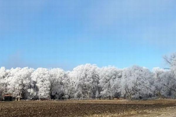 森の木々だけが霜で白く輝く、米で撮影された自然現象が美しい