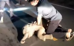 タイでバイクとゾウの赤ちゃんが衝突、救急隊員が懸命の心臓マッサージ
