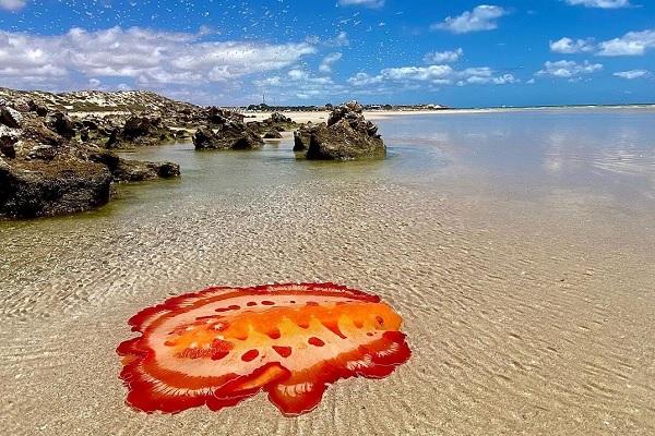 美しい海で撮影された鮮やかな色の生物!その正体とは?