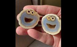 石を割ったら、クッキーモンスターそっくりの断面が現れた!