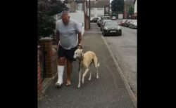 骨折した飼い主に同情?真似をして足をかばって歩くワンコが可愛い