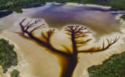 湖の底にできた水の流れ、まるで「生命の木」のようだと話題に