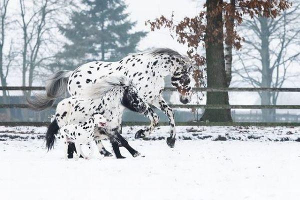 馬とポニーと犬が同じ模様、黒い斑点のある珍しいトリオの写真が話題に