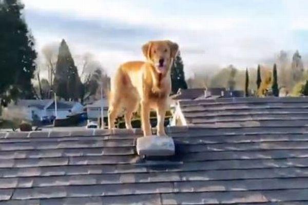 気がついたら屋根にワンコ、教えてもいないのに1匹で梯子を登ってきた!