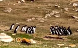 「海はどっちへ行けばいい?」相談しているようなペンギンのグループが可愛い