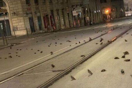 イタリアの道路に数百羽の鳥の死骸が散乱、原因は新年の花火か