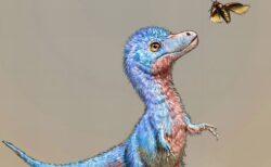 ティラノサウルスの赤ちゃんの大きさは、ボーダーコリーほどだった可能性