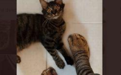 飼い主が履いたネコの足そっくりの靴下、それを見たニャンコもショック