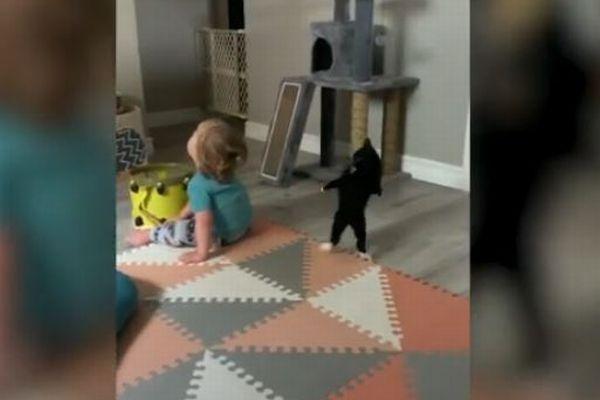 子供に相手にされなくても、戦おうとし続ける子猫の反応が可愛い