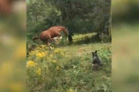 興奮した馬さん、大きなジャンプを見せるも高く飛びすぎて、コケてしまう