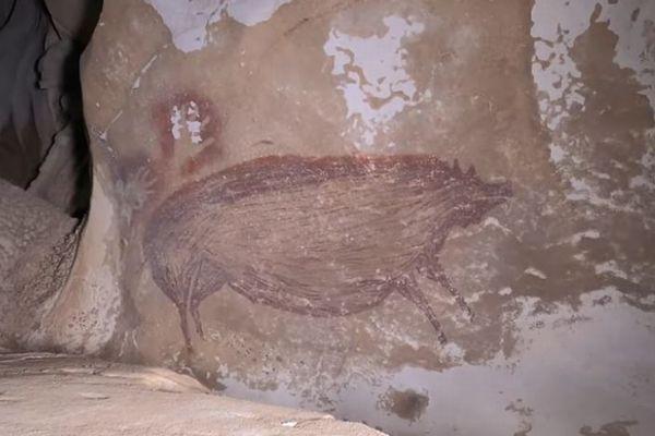 4万5500年前のイノシシの絵、世界最古の壁画をインドネシアの洞窟で発見