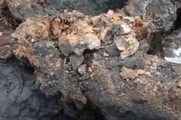 氷河時代のケナガサイ、非常に良い保存状態で発掘、内蔵の一部も残る