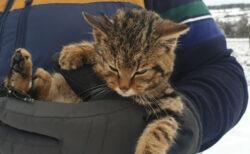 雪の中で見つけた子猫、迷子だと思ったら絶滅危惧種だった