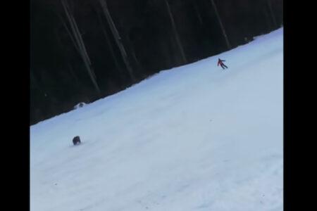 スキー場にクマ出現、猛スピードで追いかけられたスキーヤーは逃げ切れたか?