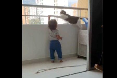 バルコニーの手すりを掴む幼児を、厳しく戒める守護猫に賞賛の声が集まる【動画】