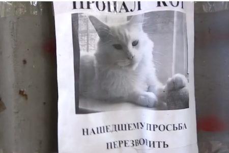 通行人に顔を向ける猫の錯視ポスターが不気味