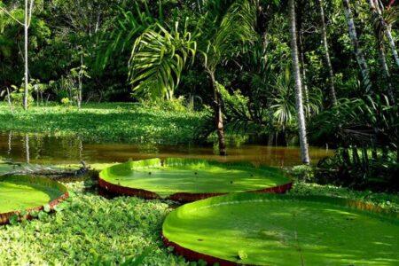 ブラジル・アマゾナス州で新型コロナの変異種に再感染した女性を特定