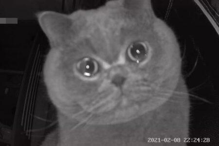 家で留守番していたネコ、寂しさからか、カメラの前で涙を浮かべる?
