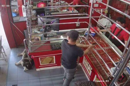 宝石店で番犬をしていたワンコ、訓練で強盗が来ても眠り続けてしまう