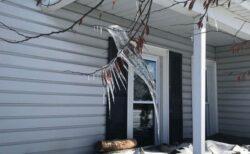 木の枝にハチドリそっくりの氷、屋根からの雫が凍り、自然に形作られる